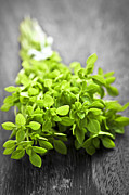 Wooden Metal Prints - Bunch of fresh oregano Metal Print by Elena Elisseeva