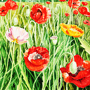 Watercolor Card Prints - Bunch Of Poppies II Print by Irina Sztukowski