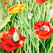 Watercolor Card Prints - Bunch Of Poppies III Print by Irina Sztukowski