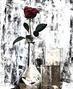 Burgundy Beauty Rose Print by Marsha Heiken