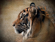 Tiger Metal Prints - Burning Bright Metal Print by Betty LaRue