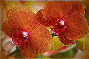 Tropical Photographs Originals - Burnt Orange Orchids by Dora Sofia Caputo