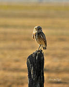 Karen Slagle Photo Framed Prints - Burrowing Owl Framed Print by Karen Slagle