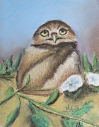 The Buffet Painting Prints - Burrowing Owl of Cape Coral  Print by Melinda Saminski