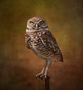 Burrowing Owl Portrait Print by Kim Hojnacki
