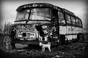 Goran Stamenkovic - Bus and dog