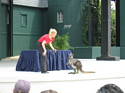 Scream Photos - Busch Gardens - Animal Show - 121217 by DC Photographer
