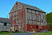 Ghost Signs Prints - Bush and Bull Roadside Barn Print by Paul Ward