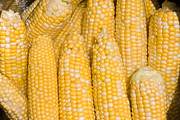 Bushel Photos - Bushel of Pealed Corn  by James Bo Insogna