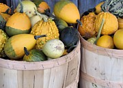 Farmstand Metal Prints - Bushels of Gourds Metal Print by Janice Drew