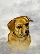 Domestic Dogs Painting Prints - Buster Print by Nan Wright