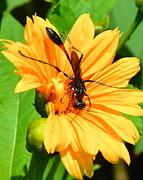 AnnaJo Vahle - Busy as a Bee