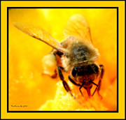 Busy Bee Prints - Busy Bee Print by Barbara Snyder