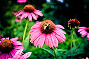 Colorful Photography Prints - Busy Bee Print by Colleen Kammerer