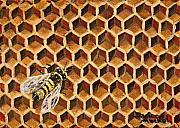 Acrylic Paintings - Busy Bee by Darice Machel McGuire