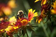 Busy Bee Print by Debra Vronch