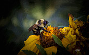 Cris Hayes - Busy Bee Oil