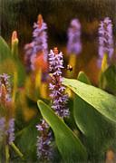 Busy Bee Print by Richard Rizzo