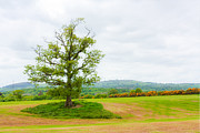 But Only God Can Make A Tree Print by Semmick Photo
