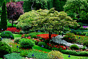 Trees Photo Framed Prints - Butchart Gardens Framed Print by Lisa  Phillips