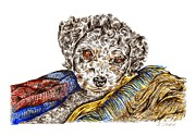 Blanket Drawings Prints - Butchie Print by Karen Sirard