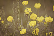 All - Buttercup Flowers by Darlene Bell