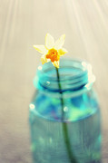 Floral Prints Framed Prints - Buttercup Photography - Flower in a Mason Jar - Daffodil Photography - Aqua Blue Yellow Wall Art  Framed Print by Amy Tyler