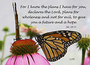 Inspirational Saying Photos - Butterflies and Jeremiah by Sharon  Smith
