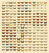 Antique Digital Art Posters - Butterflies Poster by Gary Grayson