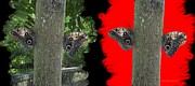 Mario Digital Art - Butterflies in Digital Art Effect by Mario  Perez