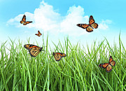Butterflies In Tall Wet Grass  Print by Sandra Cunningham