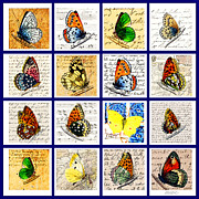 Marian Cates Metal Prints - Butterflies Metal Print by Marian Cates