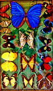 Michael Mixed Media Framed Prints - Butterflies Framed Print by Michael Knight