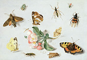 Tortoiseshell Prints - Butterflies moths and other insects with a sprig of apple blossom Print by Jan Van Kessel