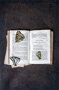 Ancient Letters Framed Prints - Butterflies On Book Framed Print by Joana Kruse