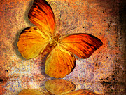 Spa Wall Decor Framed Prints - Butterfly 2 Framed Print by Mark Ashkenazi