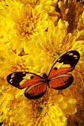 Yellows Prints - Butterfly abstract Print by Garry Gay