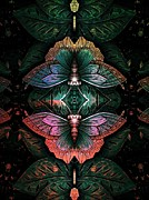 Allen Beilschmidt - Butterfly Abstraction