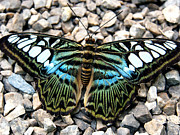 Justin Woodhouse Metal Prints - Butterfly amongst stones Metal Print by Justin Woodhouse