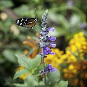 Lynn Palmer - Butterfly Amongst the Wildflowers
