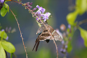 Lynn Jordan - Butterfly and a Purple...