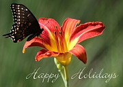 Lilies Posters - Butterfly and Lily Holiday Card Poster by Sabrina L Ryan