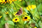 Butterfly And Yellow Flowers Print by Carlee Ojeda