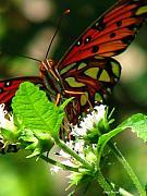 Butterfly Art Print by Greg Patzer