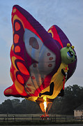 Terry DeLuco - Butterfly Balloon Readington New Jersey