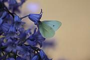 Butterfly Bounty Print by Erica Hanel