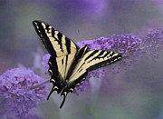 Butterfly On Flower Posters - Butterfly Bush Poster by Angie Vogel