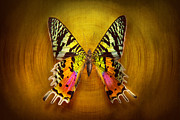Yellows Posters - Butterfly - Butterfly of happiness  Poster by Mike Savad