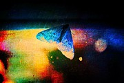 Dalibor Davidovic - Butterfly Caught 4