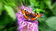 Lowestoft Framed Prints - Butterfly Framed Print by Christine Woodhouse